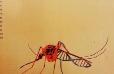 Le moustique, c'est fantastique