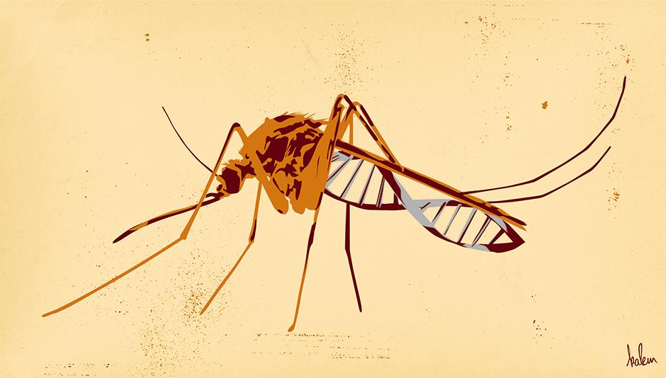 Moustique-genetiquement-modifie-web-agence-miracle-monde-libertaire-2